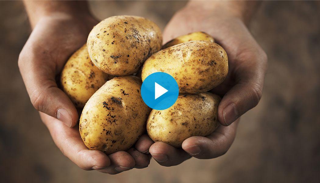 Aardappelen, absolute smaakmakers